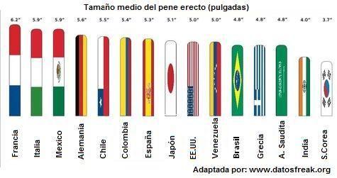 世界のペニス平均サイズ