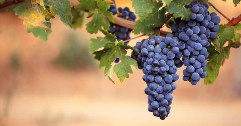 ブドウの皮や赤ワイン