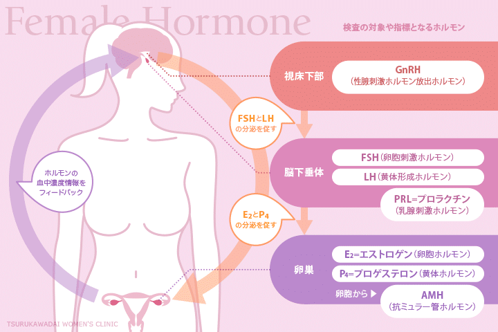 女性ホルモンに関する知識