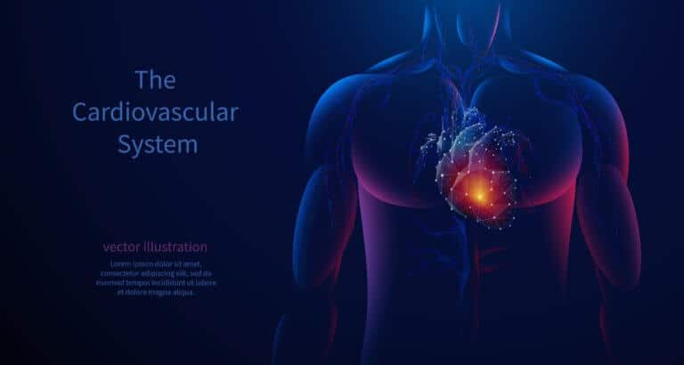 心臓と心肺機能