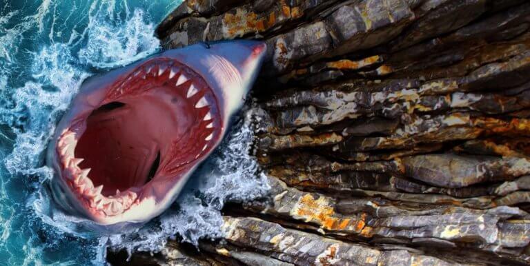 大きな口のサメ