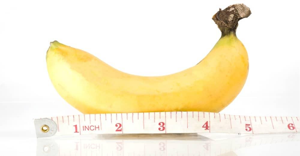 ペニスのサイズの計測