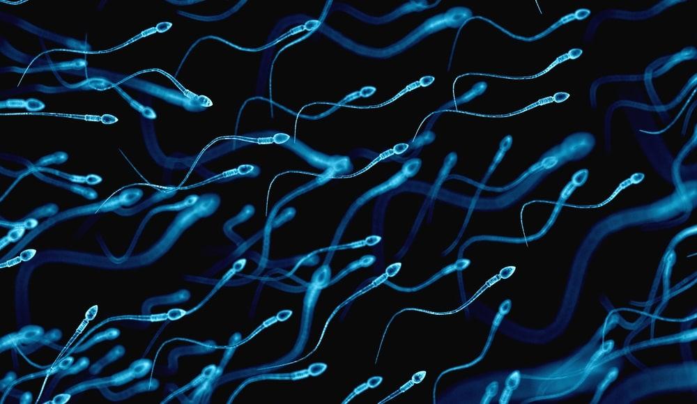 健康的な精子
