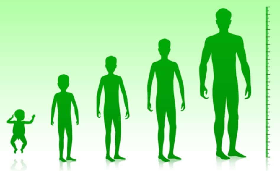 男性の成長