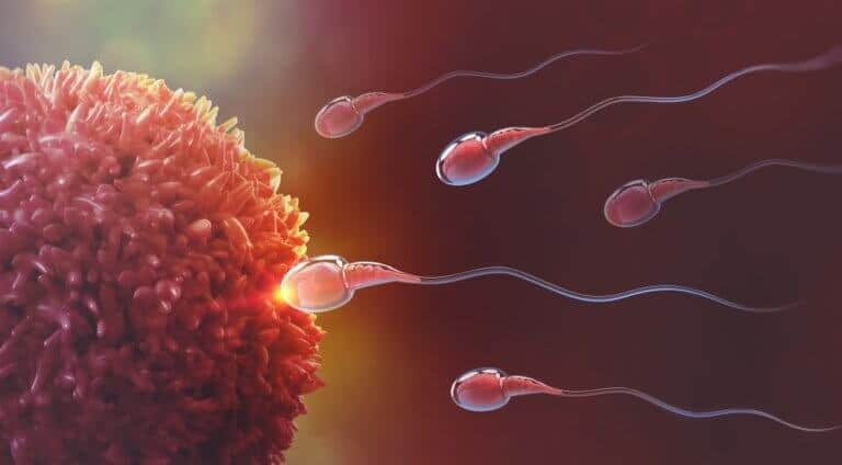 健康的な生殖機能
