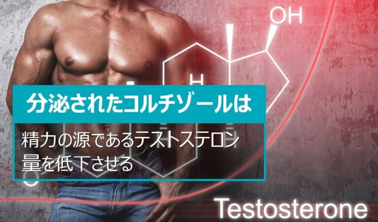 コルチゾールのテストステロン量減少効果