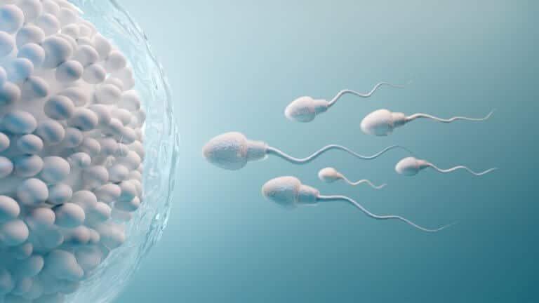 精液に含まれる精子