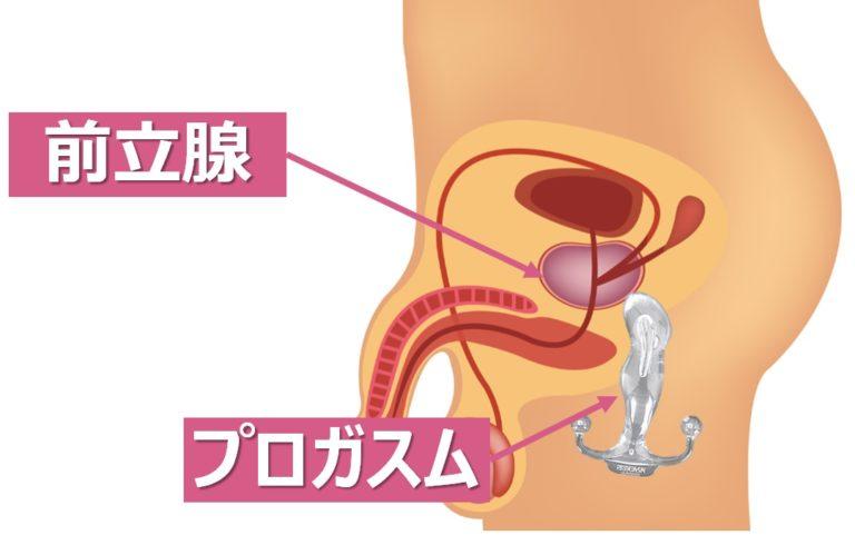 前立腺を刺激するプロガスム
