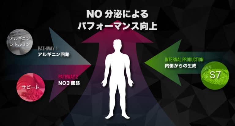 05_NO分泌を促進