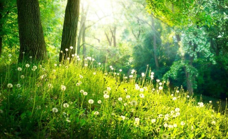 植物や樹木の美しさ